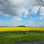 Noord-Holland geeft groen licht voor windpark Waardpolder