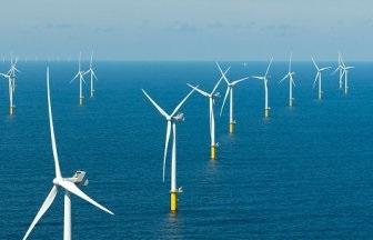 Ørsted plaatst kunstmatige riffen voor kabeljauw in windpark Borssel 1 & 2
