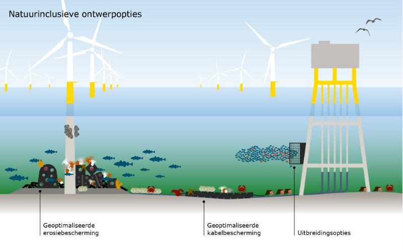 Natuurinclusief bouwen van windparken