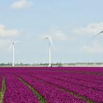 Geen draagvlak voor een windpark in Zwijndrecht