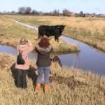 Friese natuurorganisaties boos op provincie