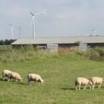 Natuurvereniging wil tiphoogte windpark Woensdrecht verlagen